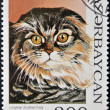 Stock Photo: AZERBAIJAN - CIRCA 1995: A stamp printed in Azerbaijan shows cat, Scottish Longhair Fold, circa 1995