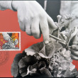 LIECHTENSTEIN - CIRCA 1982: A stamp printed in Liechtenstein dedicated to Man and work shows horticulture, circa 1982 — Stock Photo #29134843