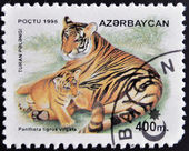 AZERBAIJAN - CIRCA 1995: A stamp printed in Azerbaijan shows panthera tigris virgata, circa 1995 — Stock Photo