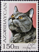 AZERBAIJAN - CIRCA 1995: A stamp printed in Azerbaijan shows cat, Chartreux, circa 1995 — Stock Photo