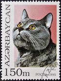 AZERBAIJAN - CIRCA 1995: A stamp printed in Azerbaijan shows cat, Chartreux, circa 1995 — Stock Photo