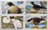 FIJI - CIRCA 2000: Stamps printed in Fiji shows Peregrine Falcon (Falco peregrinus), circa 2000 — 图库照片