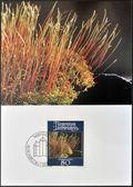 Liechtenstein - circa 1981: un timbro stampato in liechtenstein dedicato ai muschi e licheni mostra amblytegium serpente, intorno al 1981 — Foto Stock