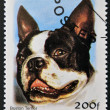 BENIN - CIRCA 2000: A stamp printed in Benin shows a dog, Boston Terrier, circa 2000 — Stock Photo