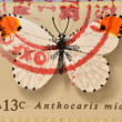 UNITED STATES OF AMERICA - CIRCA 1977: A Stamp printed in USA shows the Orange Tip, Butterfly, circa 1977  — Stock Photo
