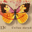 UNITED STATES OF AMERICA - CIRCA 1977: A Stamp printed in USA shows the Dogface, Butterfly, circa 1977 — Stock Photo