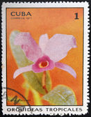 CUBA - CIRCA 1971: A stamp printed in Cuba dedicated to tropical orchids, shows catlleya skinnerii, circa 1971 — Stock Photo