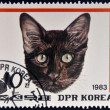 DPR KOREA - CIRCA 1983: A stamp printed in North Korea shows Havana Brown Cat, circa 1983 — Stock Photo #35046183