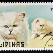 PHILIPPINES - CIRCA 1979: A stamp printed in Philippines shows Chinchilla cat, circa 1979 — Stock Photo
