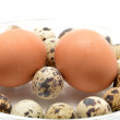 Different eggs in glass bowl — Stock Photo