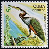 CUBA - CIRCA 1989: A stamp printed in the Cuba, shows the exotic bird, agamia agami, circa 1989 — Stock Photo