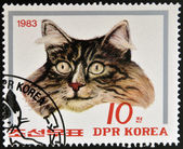 NORTH KOREA - CIRCA 1983: A Stamp printed in North Korea shows image of a Cat, circa 1983 — Stock Photo