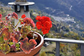 Geranium of Capileira in La Alpujarra, Granada, spain — Stock Photo