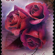 AUSTRALIA - CIRCA 2005: A stamp printed in Australia shows Rose, circa 2005  — Stock Photo