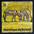 BURUNDI - CIRCA 1964: A stamp printed in Burundi shows equus asinus, wild animal, circa 1964.  — Stock Photo