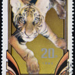 NORTK KOREA - CIRCA 1982: A stamp printed in North Korea shows young tiger, circa 1982  — Foto de Stock