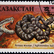 KAZAKHSTAN - CIRCA 1994: A post stamp printed in Kazakhstan shows Siberian pit viper, agkistrodon halys, circa 1994  — Stock Photo