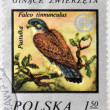 "POLSKA - CIRCA 1975 : A Stamp printed in Poland shows image of bird Kestrel -""Falco tinnunculus"", circa 1975 — Stock Photo"