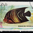 RAS AL-KHAIMAH - CIRCA 2006: A stamp printed in Ras al-Khaimah shows a fish, Pomacanthus asfur — Stock Photo
