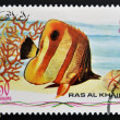 RAS AL-KHAIMAH - CIRCA 2006: A stamp printed in Ras al-Khaimah shows a fish, Chelmon rostratus, Copperband butterflyfish, circa 2006  — Stock Photo