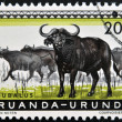 RUANDA - URUNDI - CIRCA 1960: A stamp printed in Ruanda - Urundi shows Bubalus, circa 1960 — Stock Photo