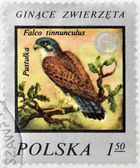"POLSKA - CIRCA 1975 : A Stamp printed in Poland shows image of bird Kestrel -""Falco tinnunculus"", circa 1975 — Foto de Stock"