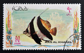 RAS AL-KHAIMAH - CIRCA 2006: A stamp printed in Ras al-Khaimah shows a fish, Heniochus acuminatus, Pennant coralfish, circa 2006 — Stock Photo