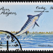 "CUBA - CIRCA 1981: A Stamp printed in Cuba shows a white marlin with the inscription ""Tetrapturus albidus"" from the series ""Pelagic Fish"", circa 1981 — Stock Photo"