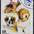 CUBA - CIRCA 2001: A stamp printed in the Cuba shows the dogs, circa 2001 — Stock Photo
