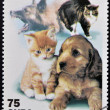 CUBA - CIRCA 2001: A stamp printed in the Cuba shows dogs and cats, circa 2001 — Stock Photo