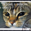 Stock Photo: SAO TOME AND PRINCIPE - CIRC1995: stamp printed in Sao Tome shows cat, circ1995