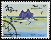 "CUBA - CIRCA 1981: A Stamp printed in Cuba shows a Sailfish with the inscription ""Istiophorus platypterus"" from the series ""Pelagic Fish"", circa 1981 — Foto de Stock"