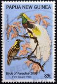 папуа новая гвинея - около 2008: марку, напечатанную в папуа показывает райская птица, paradisaea guilielmi, около 2008 — Стоковое фото