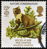 UNITED KINGDOM - CIRCA 1986: A stamp printed in Great Britain dedicated to nature conservation shows a pine marten (Martes martes), circa 1986 — Stock Photo