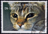SAO TOME AND PRINCIPE - CIRCA 1995: A stamp printed in Sao Tome shows cat, circa 1995 — Stock Photo