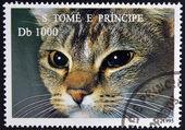 SAO TOME AND PRINCIPE - CIRCA 1995: A stamp printed in Sao Tome shows cat, circa 1995 — Stock Photo