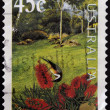 AUSTRALIA - CIRCA 2000: stamp printed in Australia shows Bottlebrush flower, circa 2000 — Stock Photo