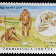 CUBA - CIRCA 1997: A stamp printed in Cuba dedicated to human prehistory shows the South African australopithecines, circa 1997 — Stock Photo #40001251