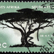 Stock Photo: SOUTH WEST AFRIC- CIRC1967: stamp printed in RSshows UmbrellThorn, Acacitortilis, circ1967