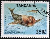 TANZANIA - CIRCA 1994: A stamp printed in Tanzania shows Carribean monk seals (Monachus tropicalis), circa 1994. — Stock Photo