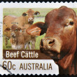 AUSTRALIA - CIRCA 2012: A stamp printed in Australia dedicated to Farming Australia shows Beef Cattle, circa 2012 — Stock Photo