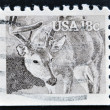 UNITED STATES OF AMERICA - CIRCA 1981: A stamp printed in the USA shows White-tailed Deer - Odocoileus virginianus, circa 1981 — Stock Photo