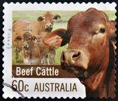 AUSTRALIA - CIRCA 2012: A stamp printed in Australia dedicated to Farming Australia shows Beef Cattle, circa 2012 — Stock Photo