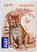 AUSTRALIA - CIRCA 2011: Postage stamp printed in Australia shows the Dingo (Canis lupus dingo), circa 2011 — Stock Photo