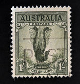 AUSTRALIA - CIRCA 1941: a stamp printed in Australia shows Male Superb Lyrebird, Menura Novaehollandiae, Songbird, circa 1941 — Stock Photo