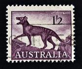 AUSTRALIA-CIRCA 1961: A stamp printed in Australia shows a Tasmanian tiger (Thylacinus cynocephalus), circa 1961 — Stock Photo