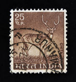 """INDIA - CIRCA 1963: A stamp printed in India shows Deer, with the inscription """"Chital"""", circa 1963 — Foto de Stock"""