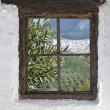 Olive grove in Rute behind the old wooden window in the wall — Stock Photo #44911317