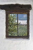 Olive grove in Rute behind the old wooden window in the wall — Stock Photo