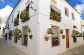 Street scene with pots of flower in the wall, Cordoba, Andalusia — Stock Photo